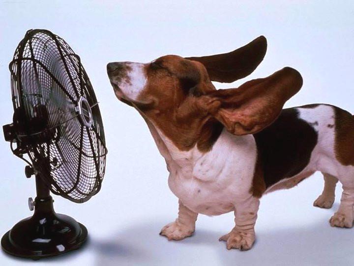 Как размораживать холодильник правильно и быстро – Собака и вентилятор