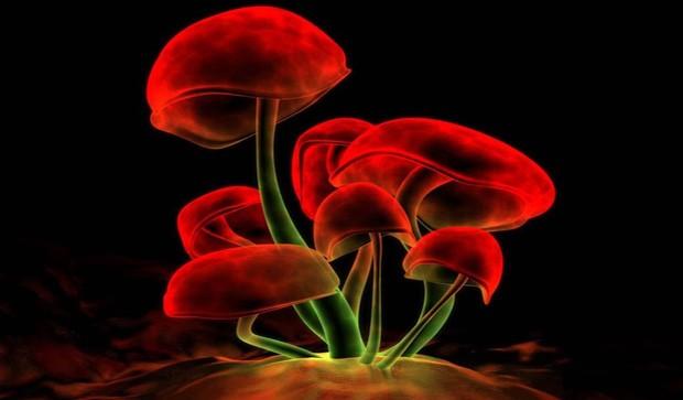 Magic mushrooms in the recipe?