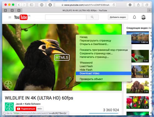 Как скачать видео с YouTube 3 способа - ClickToPlugin